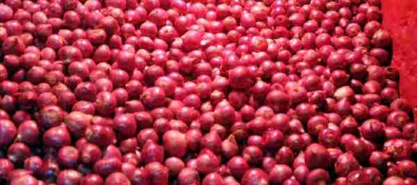 Gujarat: onion prices rise in market as heavy rains in August has damaged Kharif crop and delayed harvest.